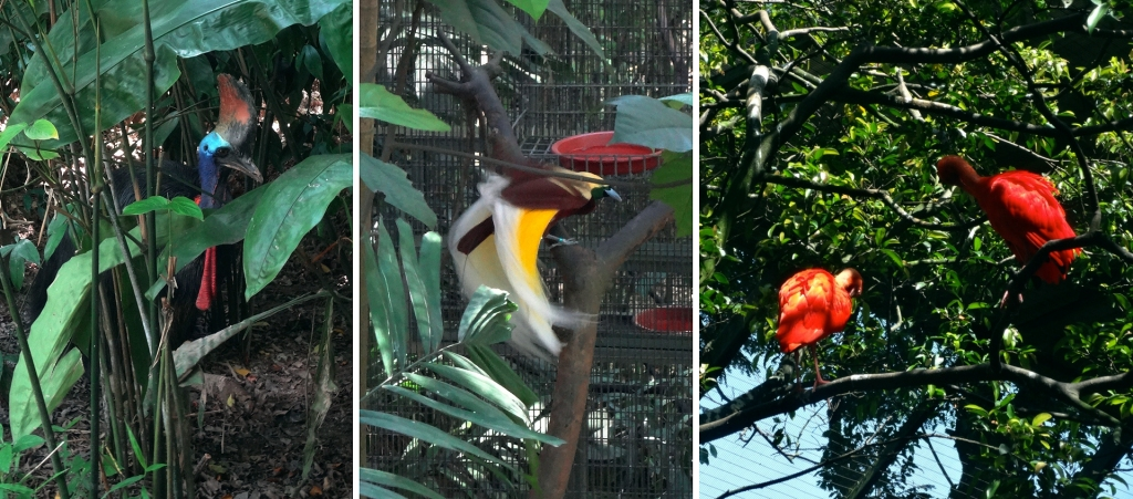The birds of Singapore. (L-R: cassowary, lesser bird of paradise, scarlet ibises)
