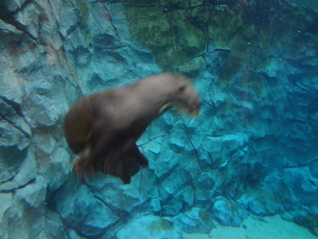 A very fast river otter!