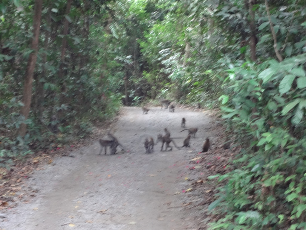 I hastily took a photo of this army of monkeys before I ran.