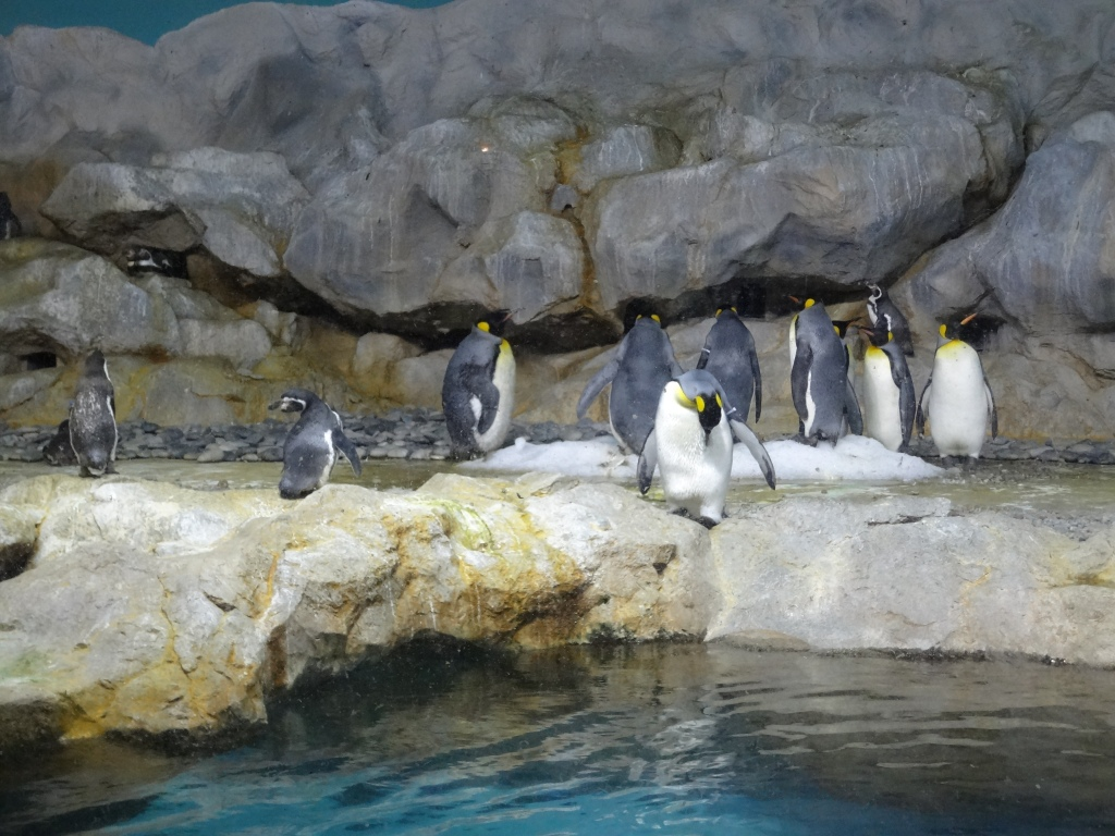 Penguins in Jurong Bird Park