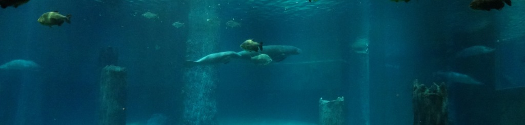 Manatees at the Amazon Flooded Forest exhibition