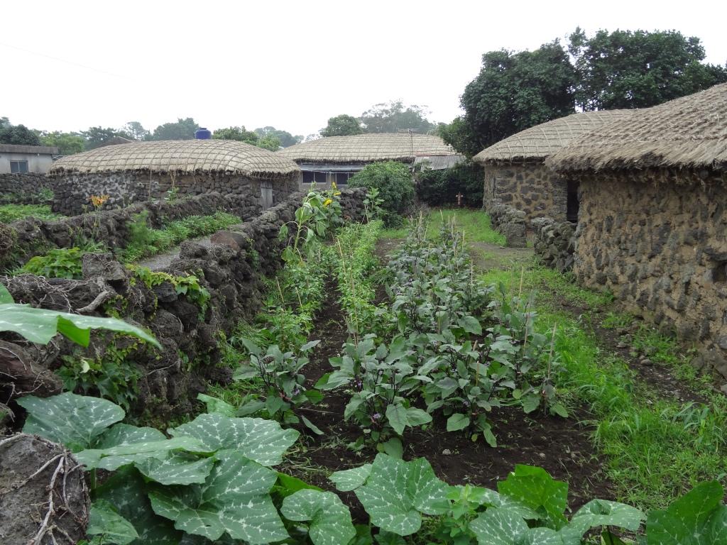 A nice vegetable garden